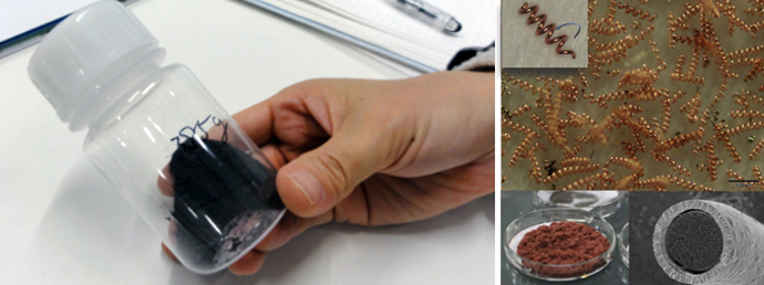 瓶に入った何億もあるスピルリナの金属マイクロコイル(左)と顕微鏡写真(右)